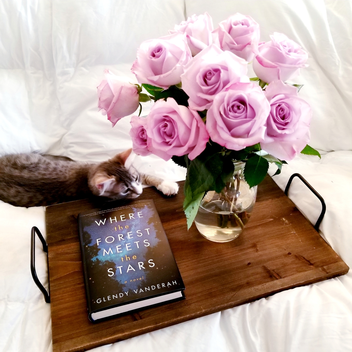 Where the Forest Meets the Stars by Glendy Vanderah #bookreview #tarheelreader #thrforeststars #glendyvanderah @amazonpub @luauthors @tlcbooktours #wheretheforestmeetsthestars #blogtour #bookgiveaway