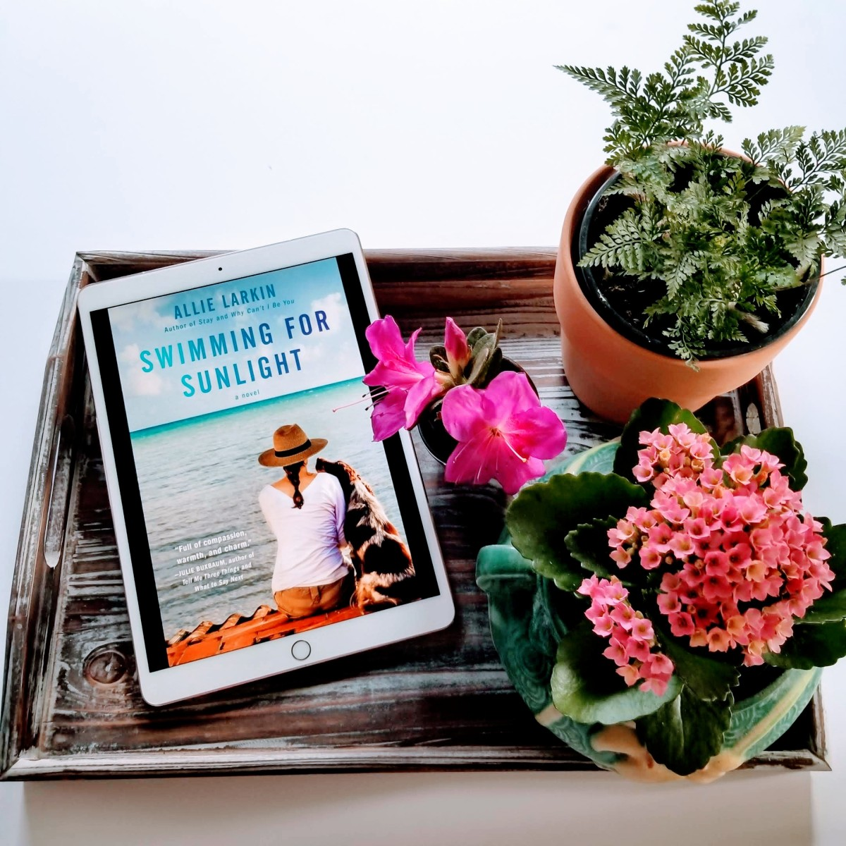 Swimming for Sunlight by Allie Larkin #bookreview #tarheelreader #thrsunlight @allielarkin @atriabooks #swimmingforsunlight